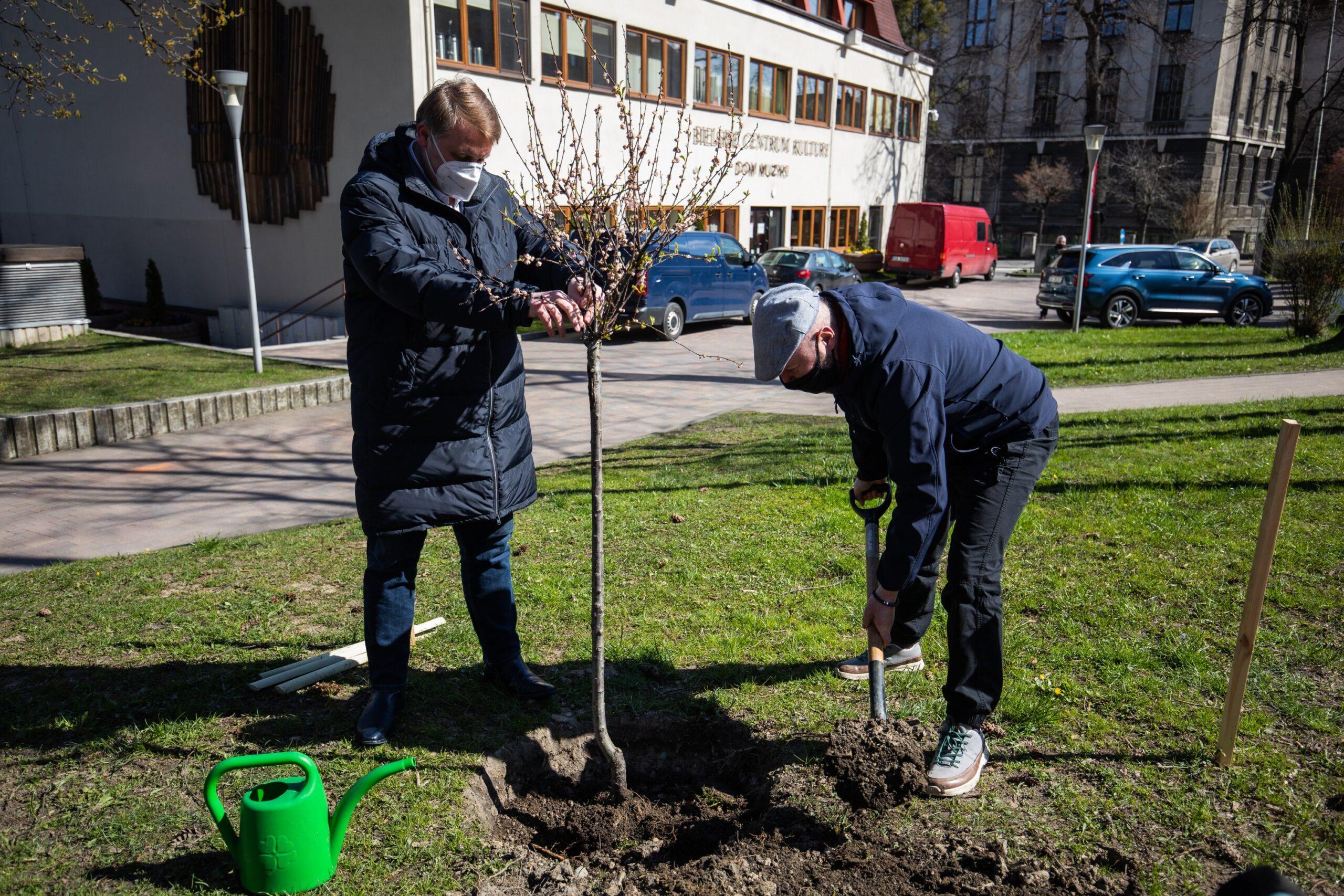 Migdałowiec sadzą od lewej prezydent Bielska-Białej Jarosław Klimaszewski i prezes Fundacji Ekologicznej Arka Wojciech Owczarz