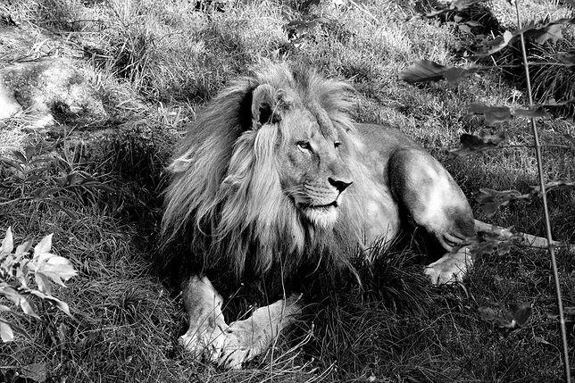 Chorzów: Odszedł wyjątkowy mieszkaniec śląskiego zoo.
